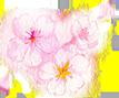 桜のイラスト画像107px-89px