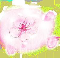 桜のイラスト画像197px-191px