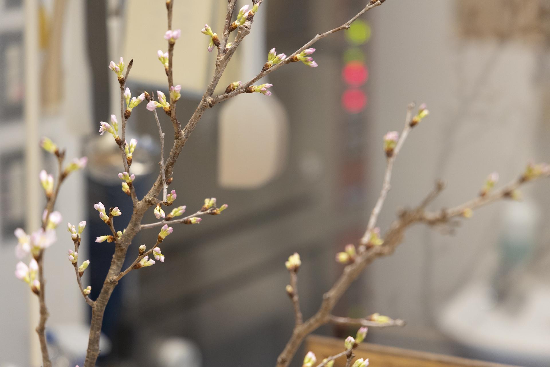 桜 パン びおりーの
